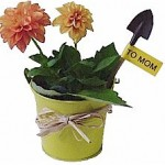 bucket of fresh flowers